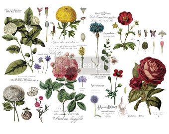 New Prima Redesign Transfer VINTAGE BOTANICALS with Free Shipping