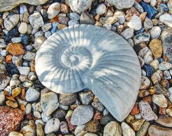 Concrete figure snail, ammonite. Hand cast fossil replica as decoration.