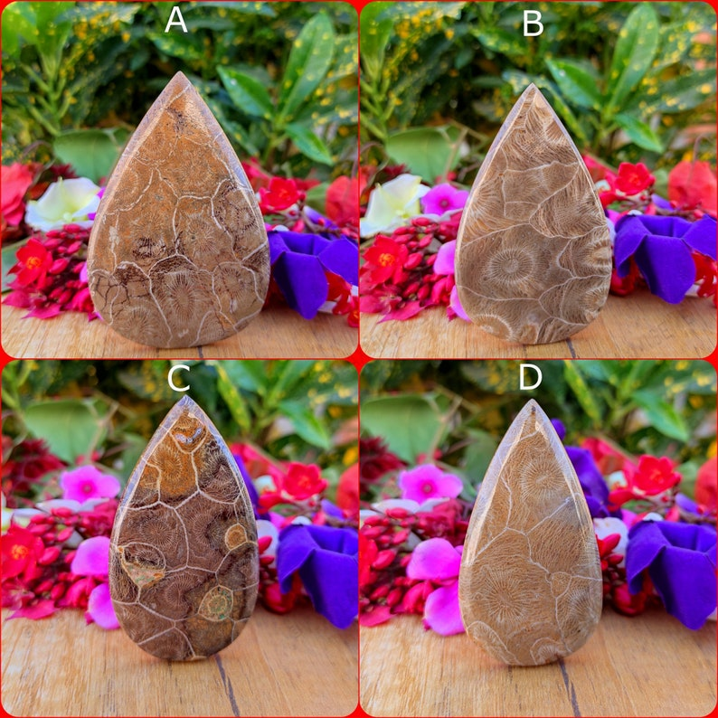 Fossil coral Palm stone pear Shape Cabochon Semi Precious  Loose Gemstone