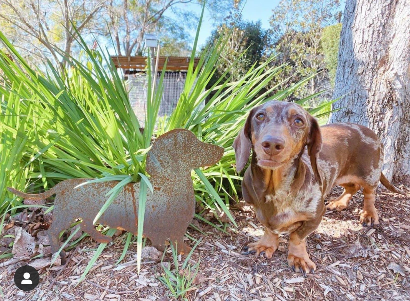 Dachshund standing next to a dachshund statue