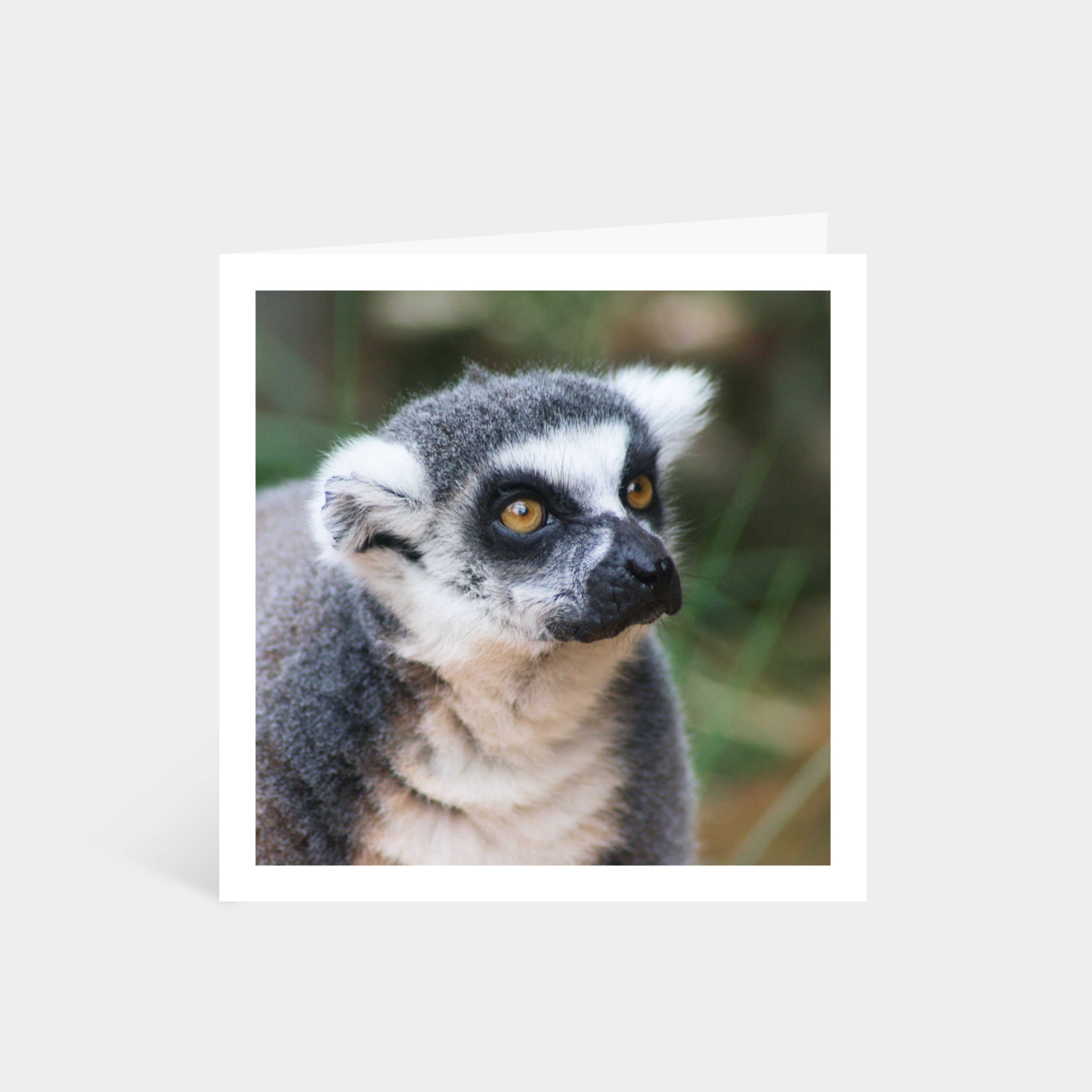 Standing square card with a close-up photo of a wide-eyed lemur/monkey
