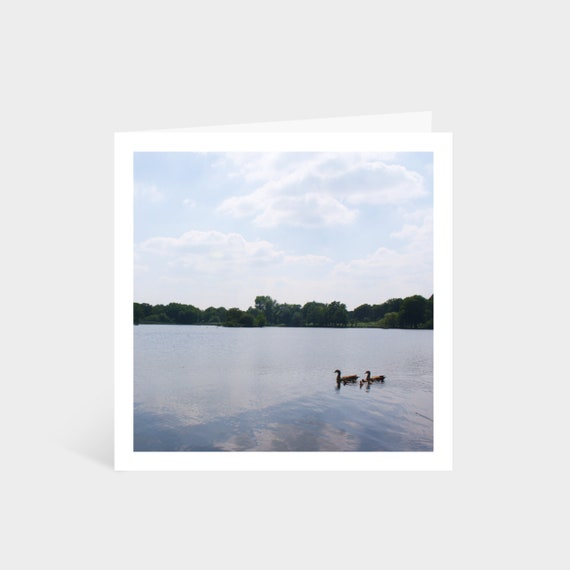 Standing square card with a photo of some ducks swimming on a tranquil lake within Richmond Park
