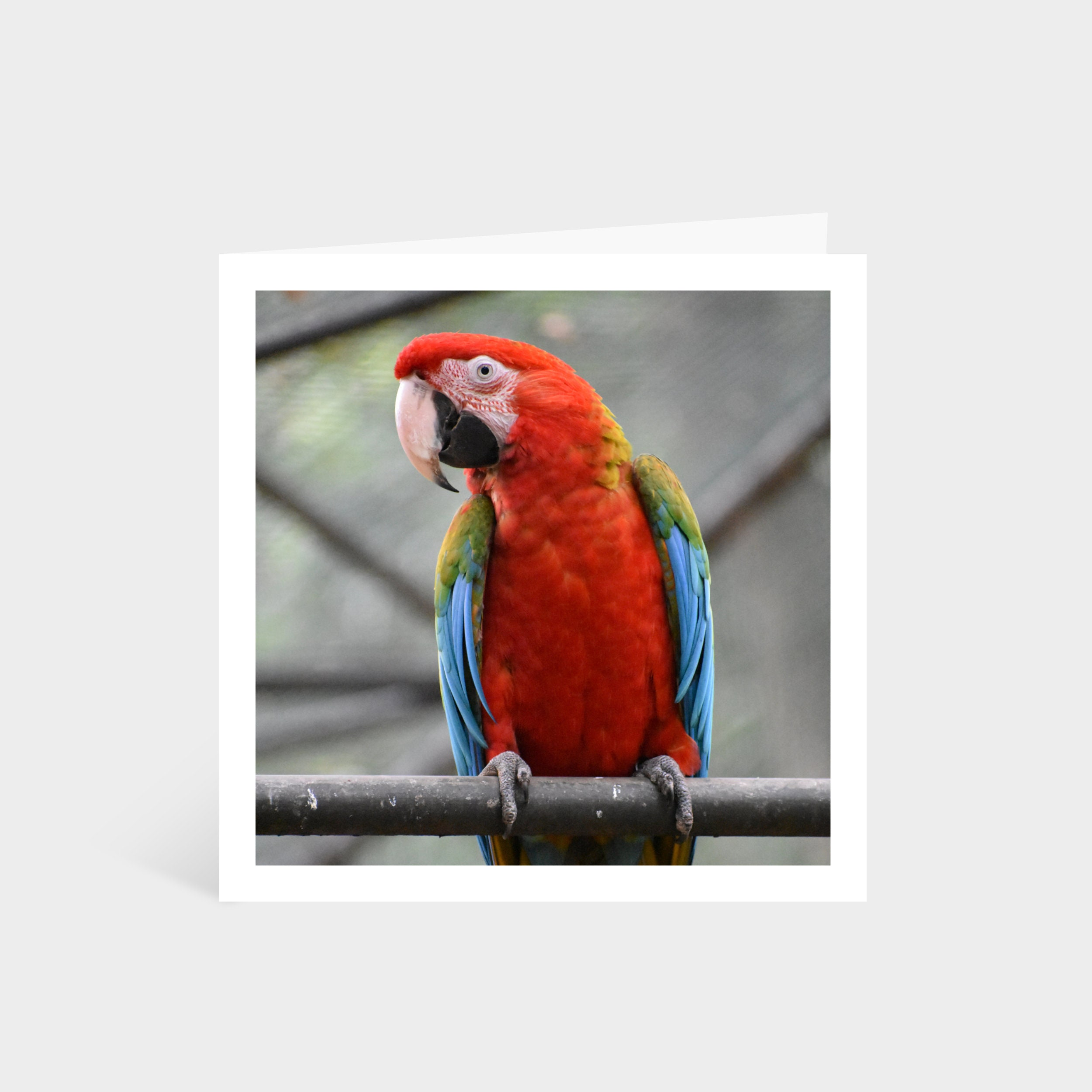Standing square card with a close-up photo of a brightly coloured macaw parrot