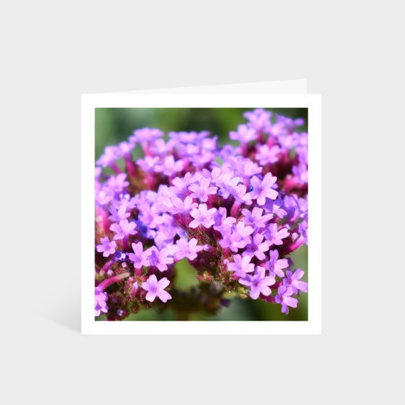 Standing square card with a close-up photo of purple flowers
