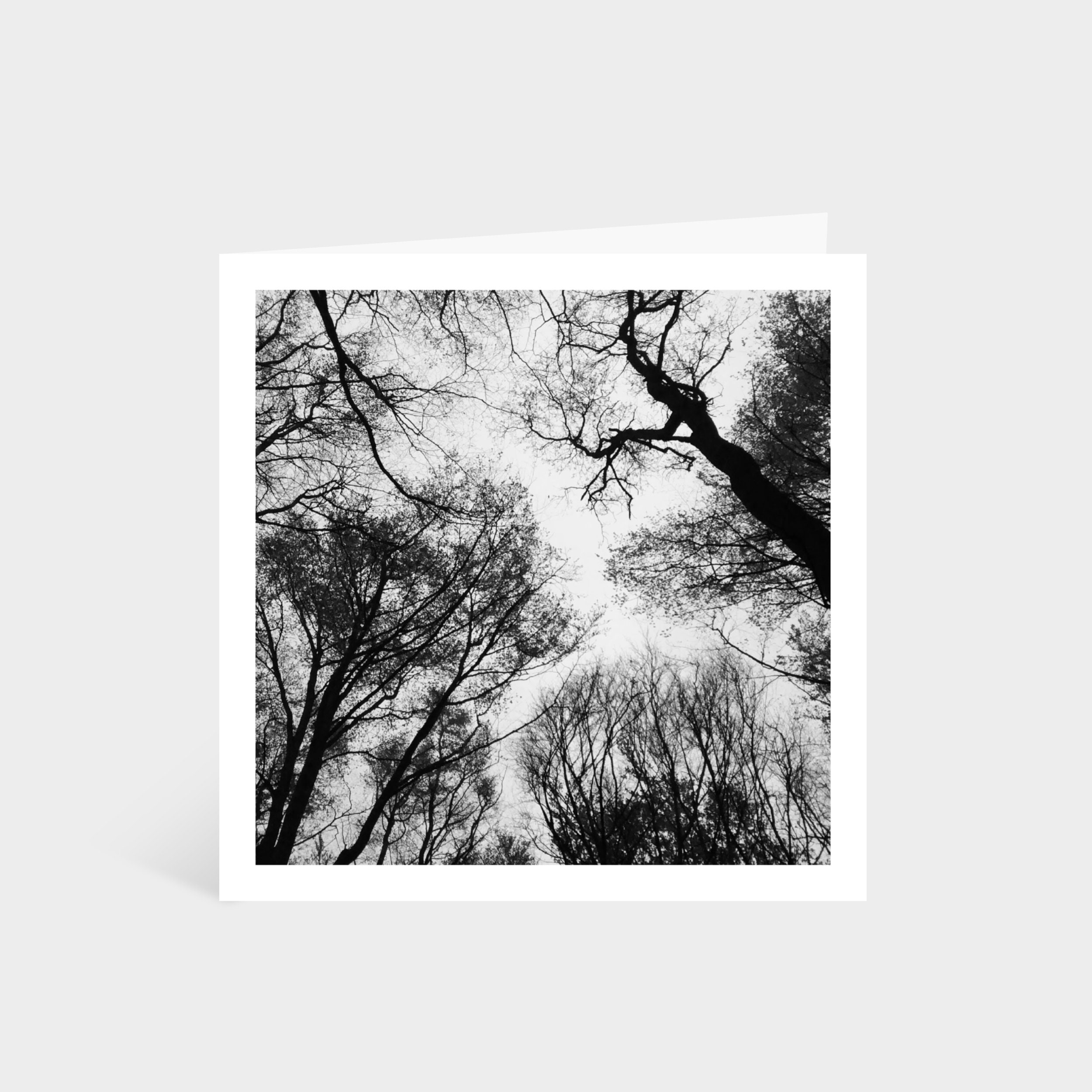 Standing square card with a monochrome photo looking up to a canopy of trees