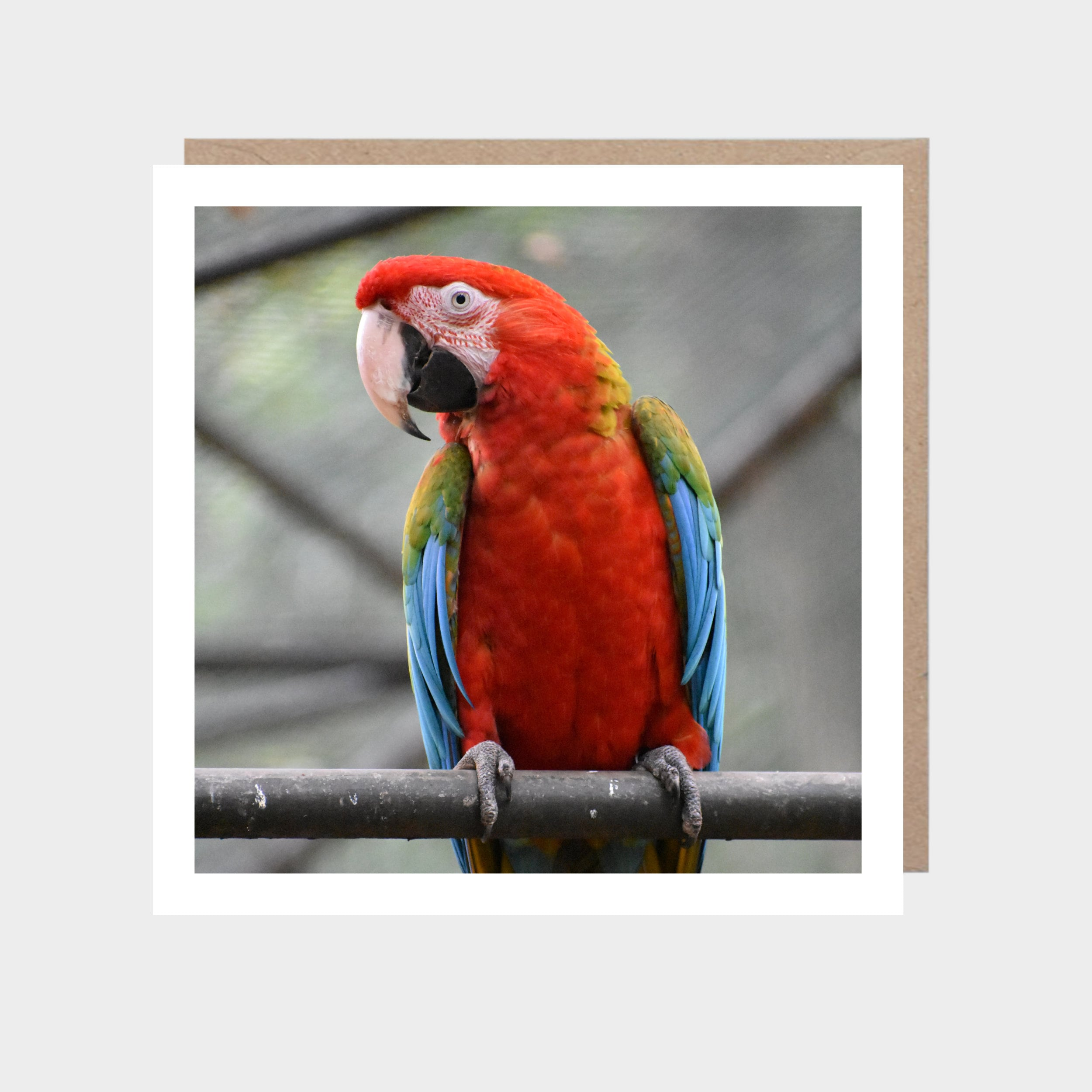 Square card with a close-up photo of a parrot, with a brown kraft envelope