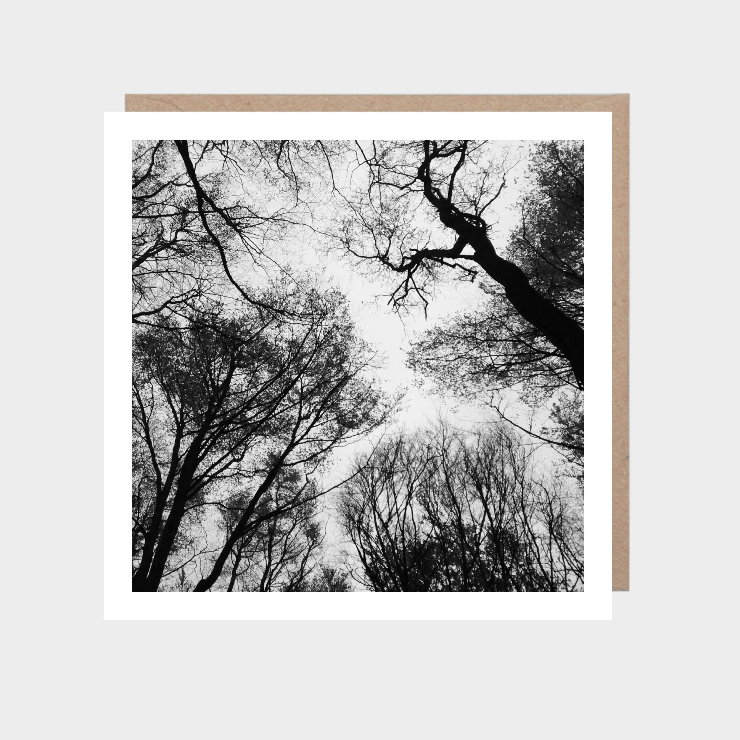 Square card with a photo of a tree canopy, with a brown kraft envelope