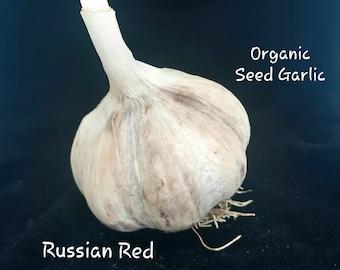ORGANIC Heirloom Seed Garlic Russian Red