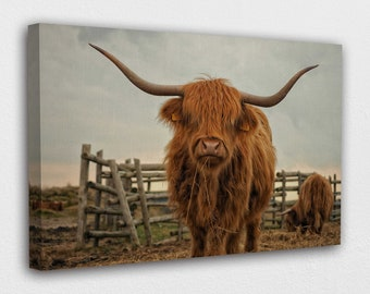 Scottish Cow Boxed Canvas Painting Harris The Highlander Canvas Mini by Sue Gardner Small Wildlife Highland Cow Canvas Gift