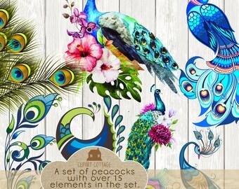 Peacock Vector Graphic Bird Turquoise Clipart Clip Art Wedding