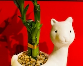 Lucky bamboo beautiful vase for gift valentines