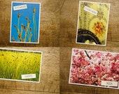 Graspapierpostkarte nachhaltig regional klimaneutral und vegan