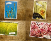 Grass paper postcard sustainably regionally climate neutral and vegan