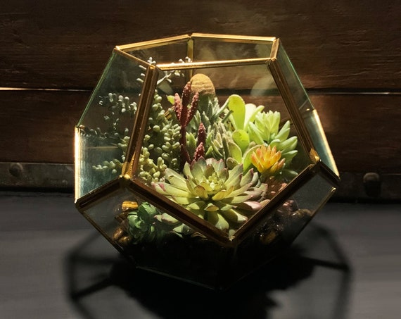 Tiger's Eye Antique Gold Geometric Hexagon Faux Succulent Glass Terrarium