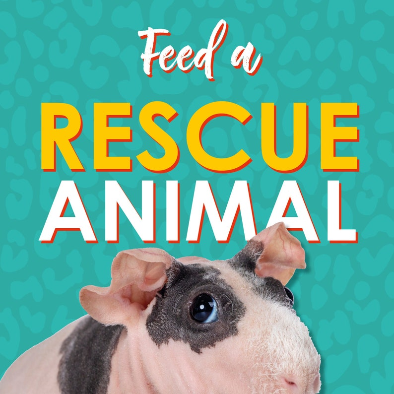 Buy a Special Meal for one of our 100 rescue animals image 0