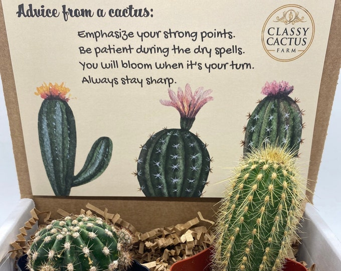 Cactus Gift Box - (set of 2) Advice from a cactus