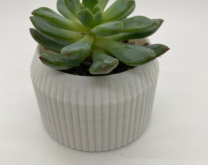 Succulent planter with succulent - Made by a 3D printer