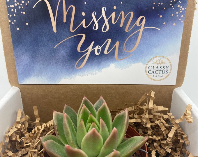 Succulent Gift Box - Missing You (3 inch plant)