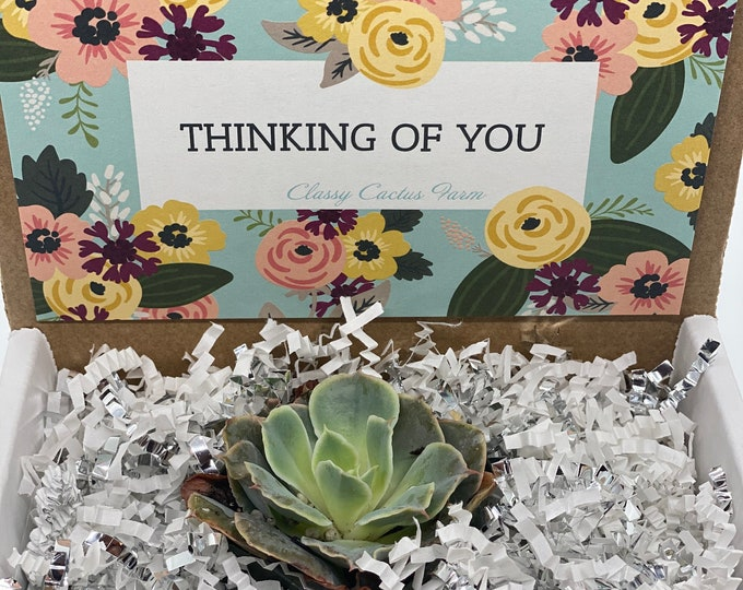 Thinking of You Succulent Box - 1 plant