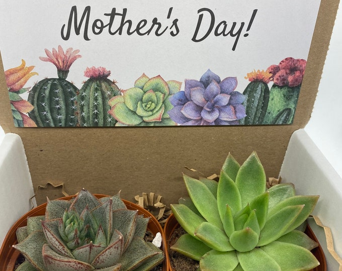 Succulent Gift Box - Happy Mother's Day (set of 2) 3 inch plants
