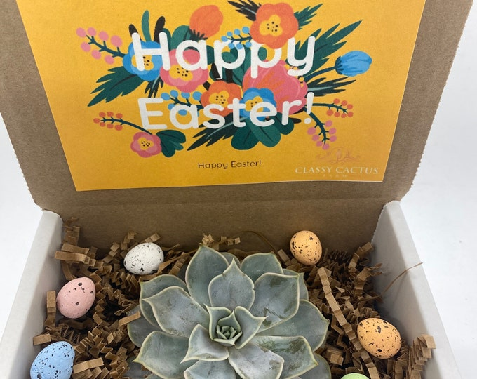 Happy Easter Succulent Box - 3 inch plant (yellow box)