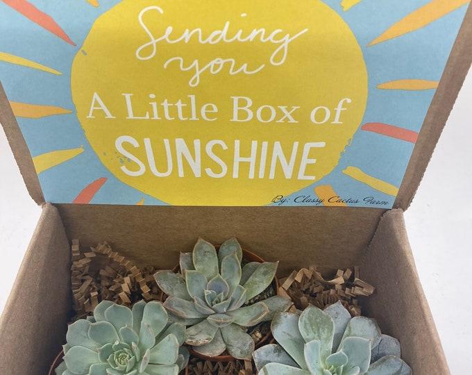 Succulent Gift Box - Box of sunshine 3 plants (2 inch plant)