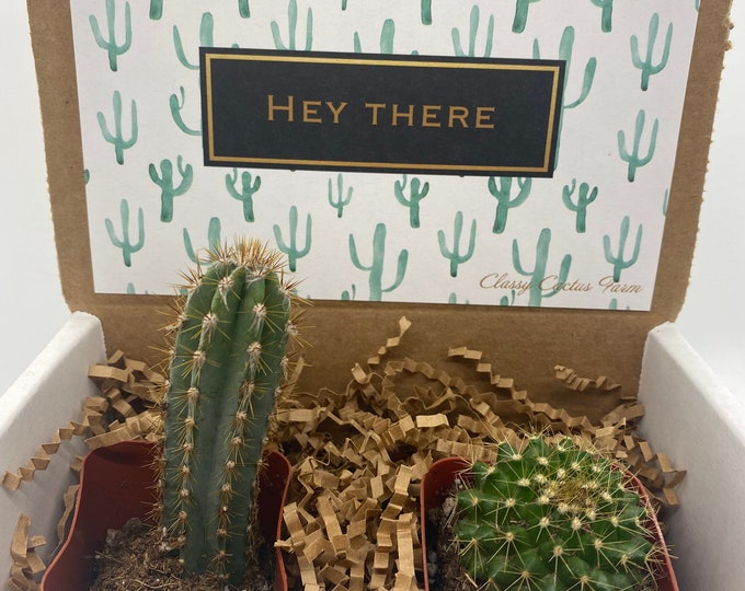 Cacti Gift Box - Hey There (set of 2)