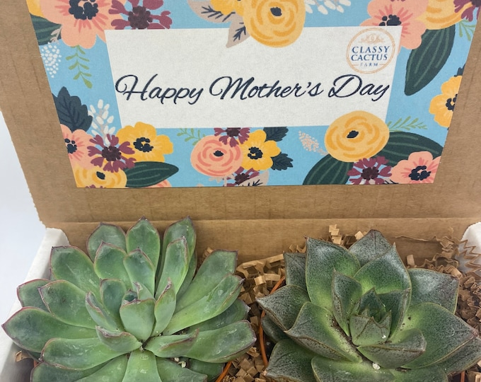Succulent Gift Box - Happy Mother's Day floral (set of 2) 3 inch plants