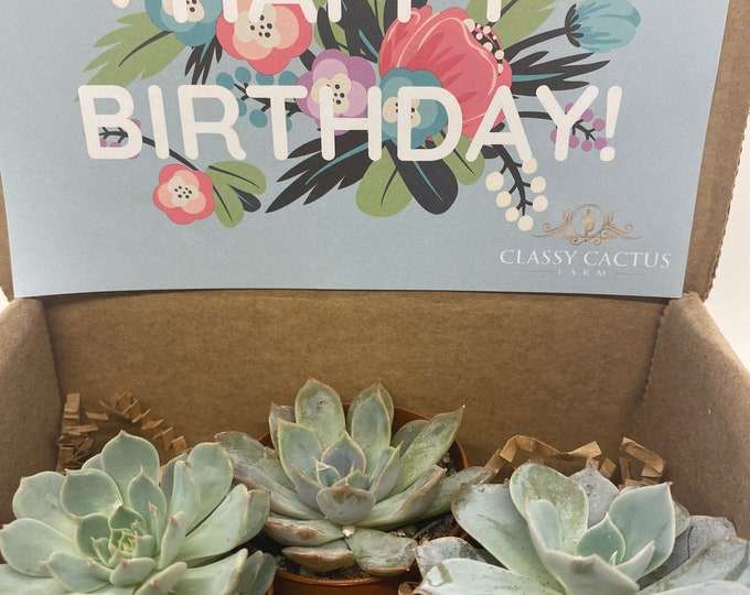 Succulent Gift Box - Floral Happy Birthday - 3 plants (2 inch plant)
