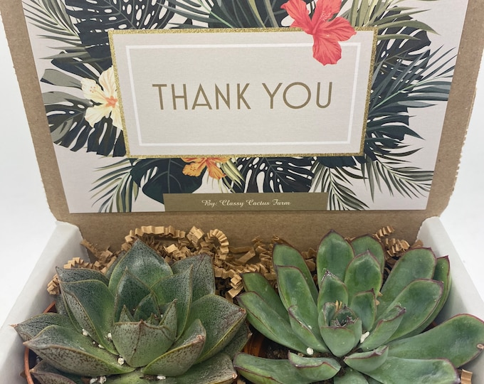 Succulent Gift Box - Thank You Box - 2 Large plants (3 inch plant)