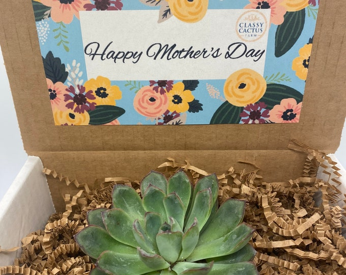 Mother's Day succulent Gift Box (1 plant) 3 inch succulent. (Floral design)