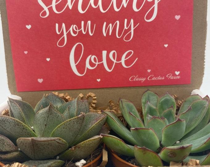 Succulent Gift Box - Sending my love - 2 Large plants (3 inch plant)