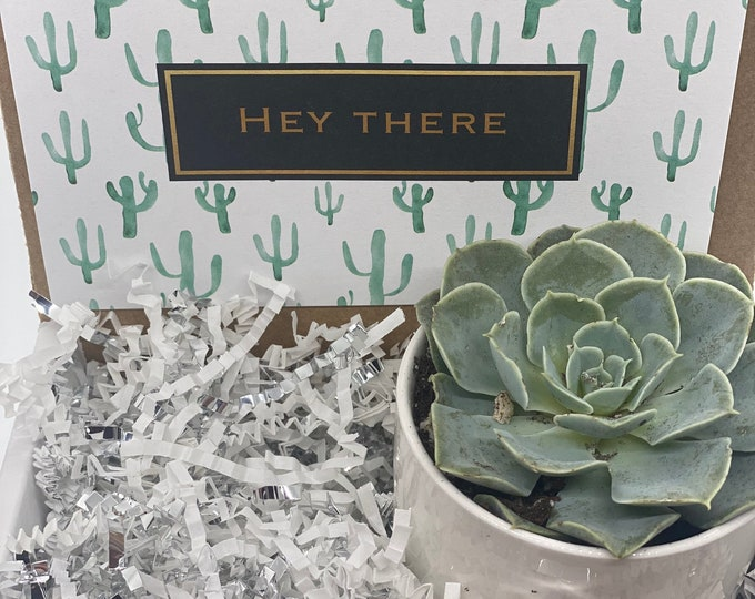 Hey There Succulent Box - 1 potted succulent