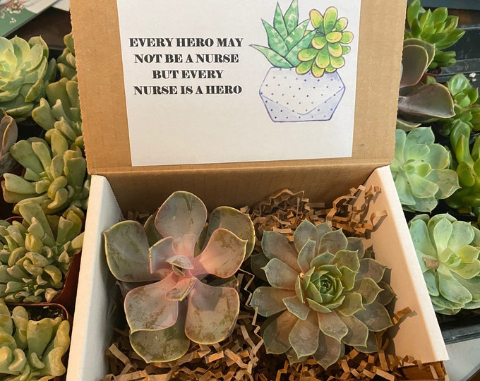 Succulent Gift Box for a Nurse (2 inch succulents - set of 2)