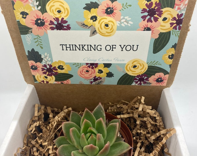 Succulent Gift Box - Thinking of You (3 inch plant)