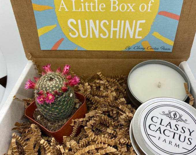 Cactus Gift Box and candle set- Cactus Bloom