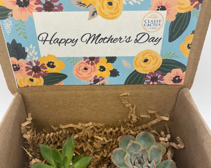 Succulent Mother's Day Gift Box - (set of 2) Happy Mother's Day floral. 1 inch small