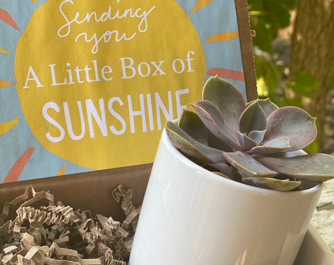 Succulent & Planter Gift Box