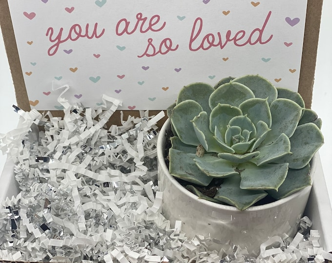 Valentine's Day Succulent Box You are so Loved - 1 potted succulent