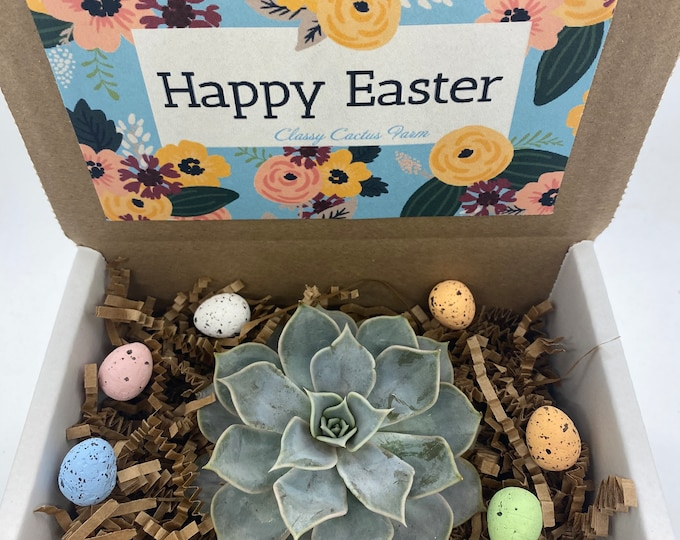 Happy Easter Succulent Box - 3 inch plant