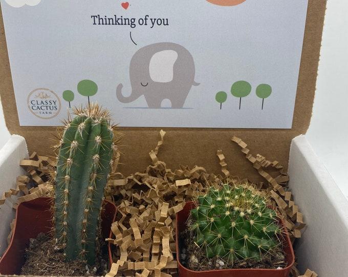 Cactus Gift Box - Thinking of You elephant  (Set of 2)