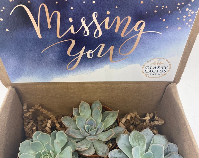 Succulent Gift Box - Missing You - 3 plants (2 inch plant)