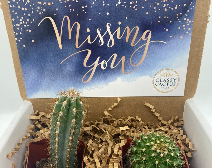 Cactus Gift Box - Missing You (set of 2)
