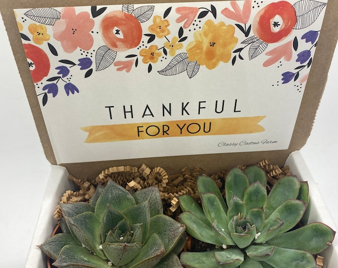 Succulent Gift Box - Thankful for You - 2 Large plants (3 inch plant)