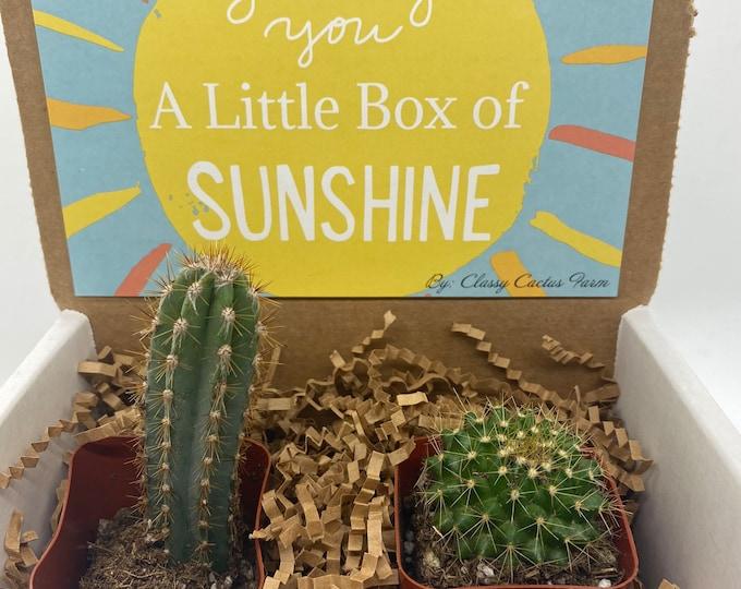 Cactus Gift Box - Box of sunshine (set of 2)