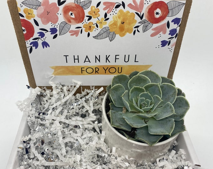 Thankful for You Succulent Box - 1 potted succulent