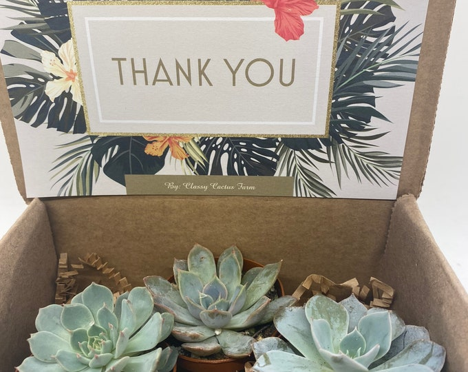 Succulent Gift Box - Thank You Box - 3 plants (2 inch plant)