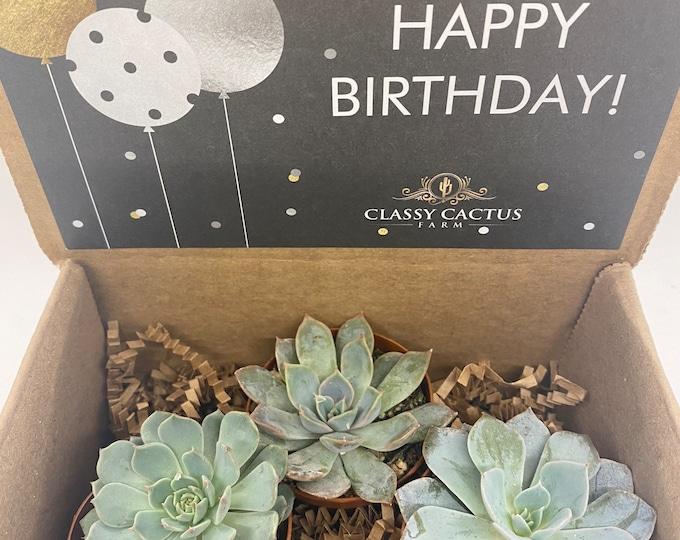Succulent Gift Box - Happy Birthday Balloon - 3 plants (2 inch plant)
