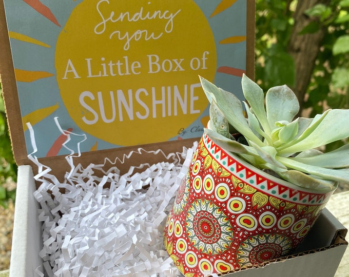 Colorful Succulent planter gift box with succulent