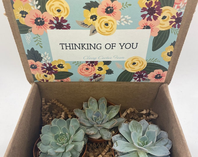 Succulent Gift Box - Thinking of You - 3 plants (2 inch plant)